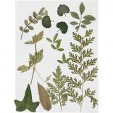 Gepresste Blätter, Grün, 1 Pck.
