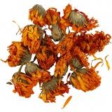 Trockenblumen, Golden, Ringelblume, D: 1 - 1,5 cm, 1 Pck.