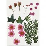 Gepresste Blüten und Blätter, Rosa, 19 sort./ 1 Pck.
